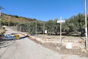 Terreno agricolo attivato ad uliveto esteso 17.500 metri quadri circa in vendita a Casteldaccia (PA)