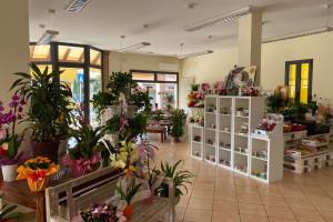 Attività di fioreria Mardimago rif. 241